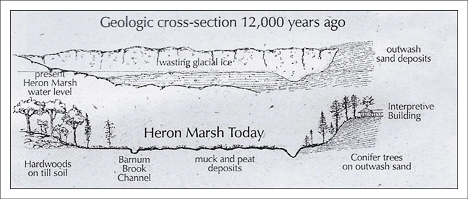 Paul Smiths VIC:  Marsh Geology