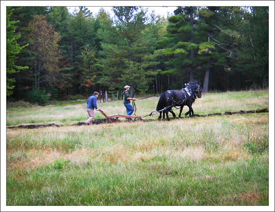 Adirondack Rural Skills and Homesteading Festival: Demonstration by the Paul Smith's College Draft Horse Club (29 September 2012)